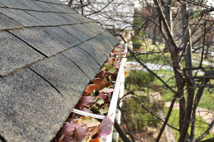 Gutter Cleaning Leaves